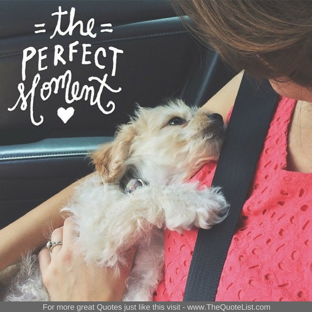 """The Perfect Moment"" - Unknown Author"